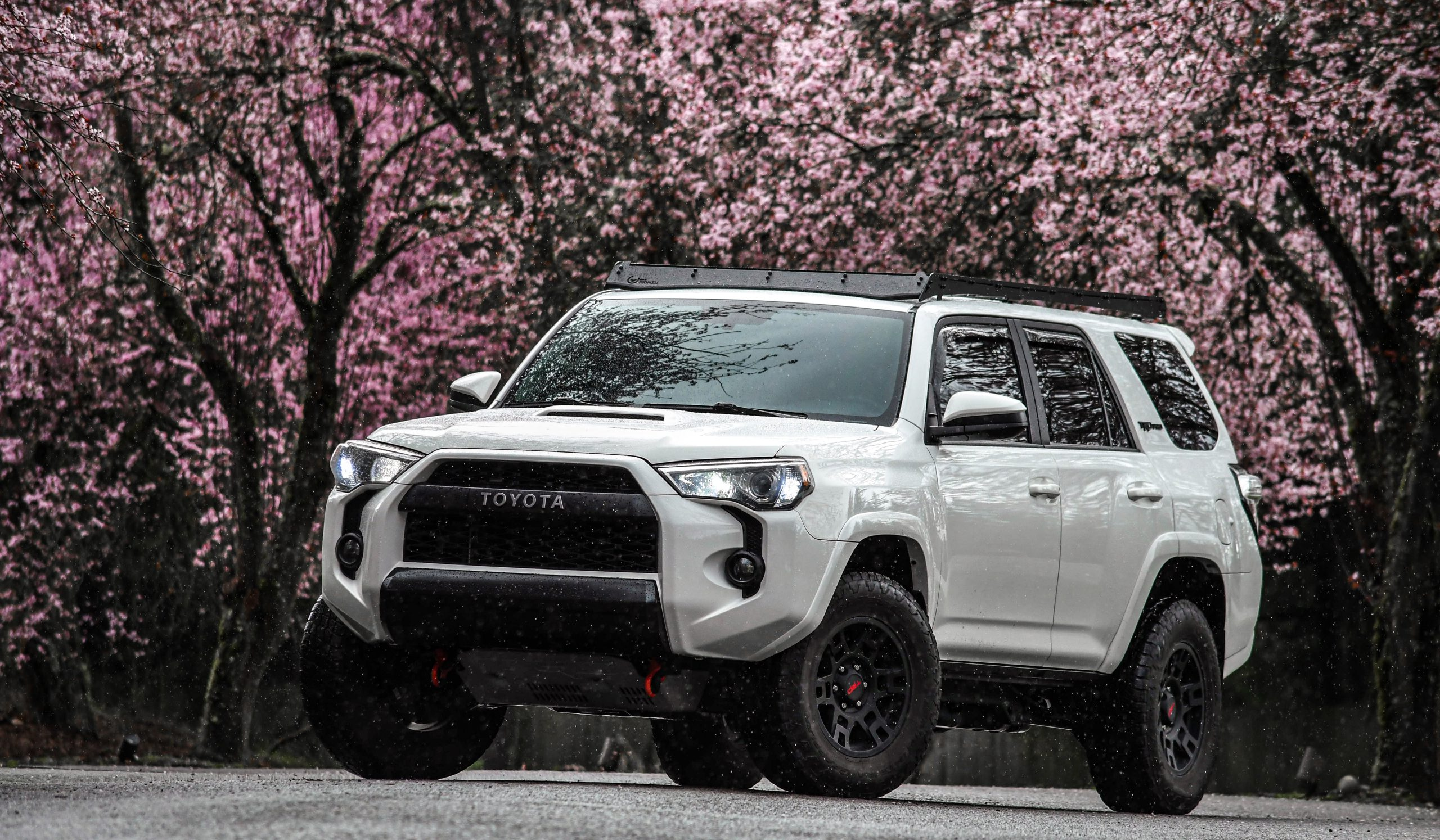 Sakura Saturday
